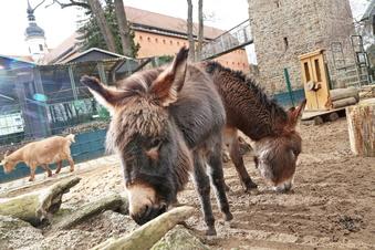 Riesa: Tierpark und Museum öffnen wieder