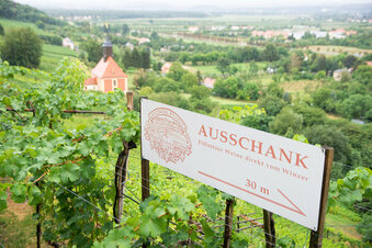 Entspannen in Dresdens Weingärten