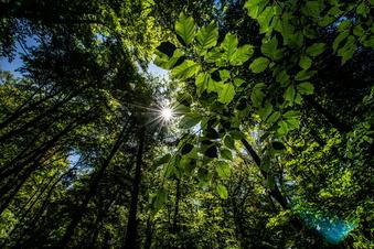 Witterung hilft Sachsens Wäldern