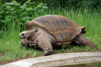 Dresdner Zoo: Wo steckt Hugo III?