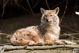 Neue Tierart in Sachsen gesichtet