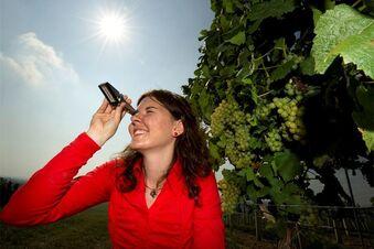 Pflanzengift in 13000 Litern Wein
