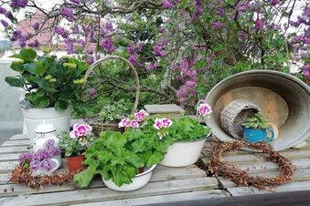 Kamenz: Gäste in 17 Gärten willkommen