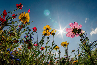 Kamenzer laden zum Blick in fremde Gärten ein