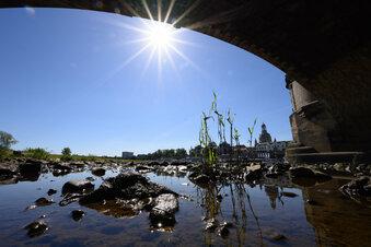 Dresden droht eine Hitzewelle