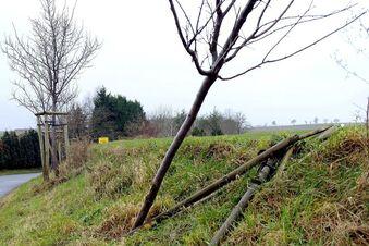 Wer pflegt die Bäume am Meißner Eichberg?