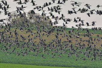Vogelgrippe in Deutschland nachgewiesen