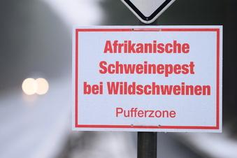Rund 130 Schweinepest-Fälle in Sachsen