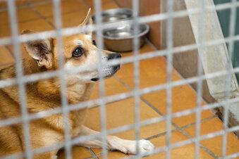Tierheime wegen Corona am Limit