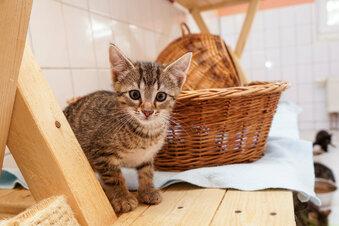 Corona: Tierheim braucht dringend Spenden