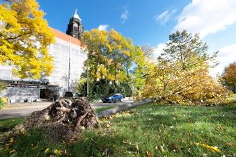 Sturm in Dresden: Aufräumen bis zum nächsten Tag
