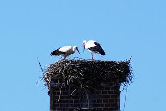 Wilsdruff hat wieder ein Storchenpaar