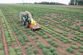 10.500 Frauen arbeiten in Sachsen in der Landwirtschaft