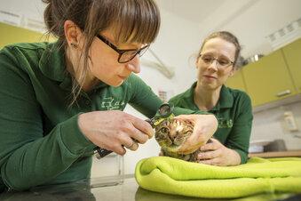 Lohmener Tierarztpraxis am neuen Standort