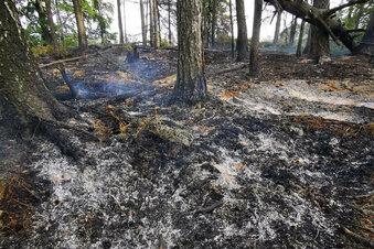 Das Feuer im Nationalpark ist aus