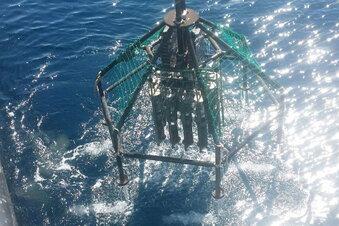 Forscher finden Mikroplastik in der Tiefsee