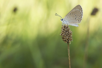Schmetterlingstag in Ulberndorf