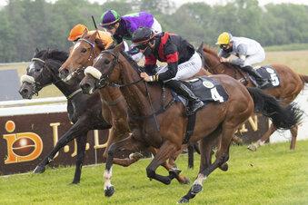 Ausländische Pferde dürfen diesmal starten