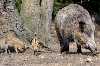 Wissenswertes über Wildschwein, Luchs & Co.