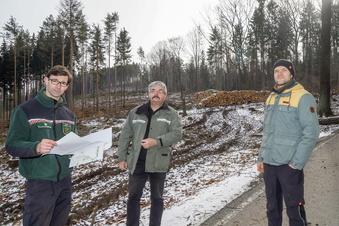Kreis Bautzen: So groß sind die Waldschäden