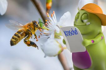 Warum summen Bienen?