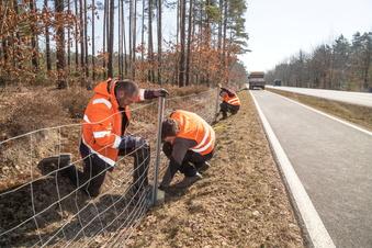 Hilfe für Sachsen beim Schweinepest-Zaun