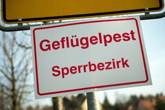 Vogelgrippe erreicht Brandenburg