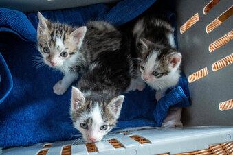Katzenbabys gerettet