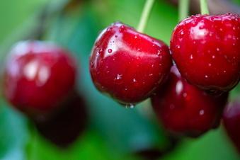 So tragen Ihre Obstgehölze viele Früchte