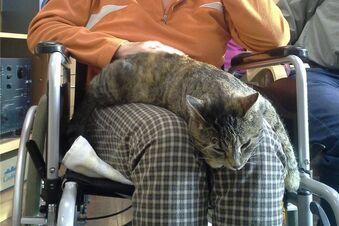 Katze Lotte hilft beim Erinnern