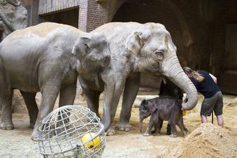So kämpft sich Leipzigs Minifant durch