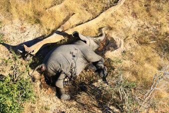 Warum sterben Botsuanas Elefanten?