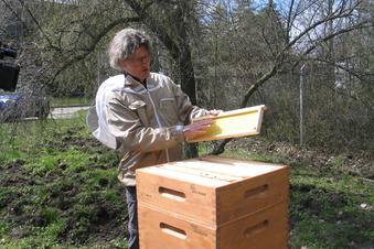 Stadtwerke produzieren eigenen Honig