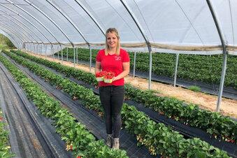 Erdbeer-Prinzessin holt Erntehelfer in Görlitz ab