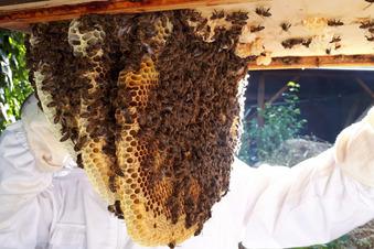 Meißner Honig von Montequesto
