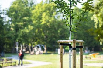 Pirna forstet Thälmannpark auf
