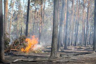 Weniger Waldbrände in Sachsen
