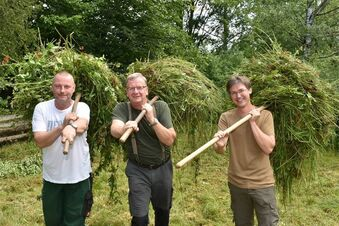 Die Grüne Liga lädt zur Grasmahd ein