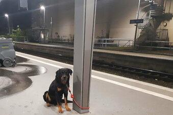 Wegen dieses Hundes: Bahn verlegt Züge