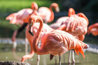Dresdner Zoo muss schließen