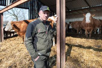Landwirt entsetzt über Wolfsriss in Radeberg