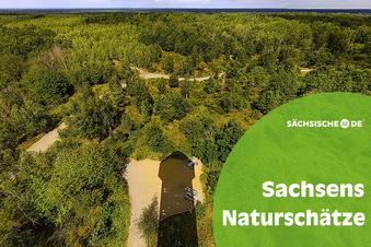 Natur erobert Sowjetgelände bei Dresden zurück