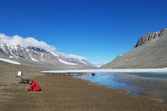Grünere Antarktis durch Klimawandel