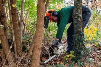 Herbst-Pflegeeinsätze für Parks und Wälder