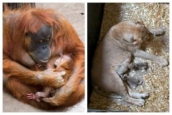 Leipziger Zoo freut sich über Nachwuchs