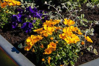 Stadtgärtnerei pflegt Blumenkübel