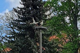 Bernstadt hat ein Storchenwunder