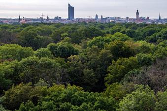 Rettung für den Auwald in Leipzig