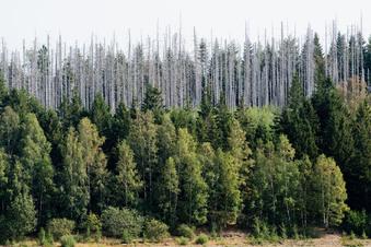 Grüne fordern radikaleren Klimakurs