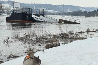 Hochwasserscheitel der Elbe ist durch